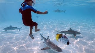 KIDS Swimming with SHARKS in Tahiti!! ARE THEY NICE??