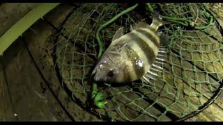 Sheepshead fishing Galveston, Tx (Seawolf Park) 720p HD