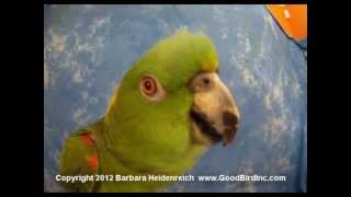 My Parrot Sings Bad Bird to the Tune of Bad Boys