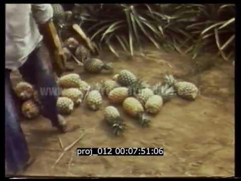 Reportage sur la Guinée