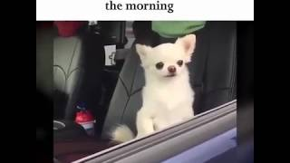 THERE ARE TWO TYPES OF PEOPLE IN THE MORNING / ™MemeYouyou Official™