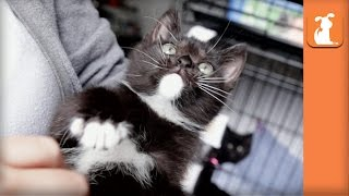 Rescue Kittens Searching For Forever Home, But May Have FIV
