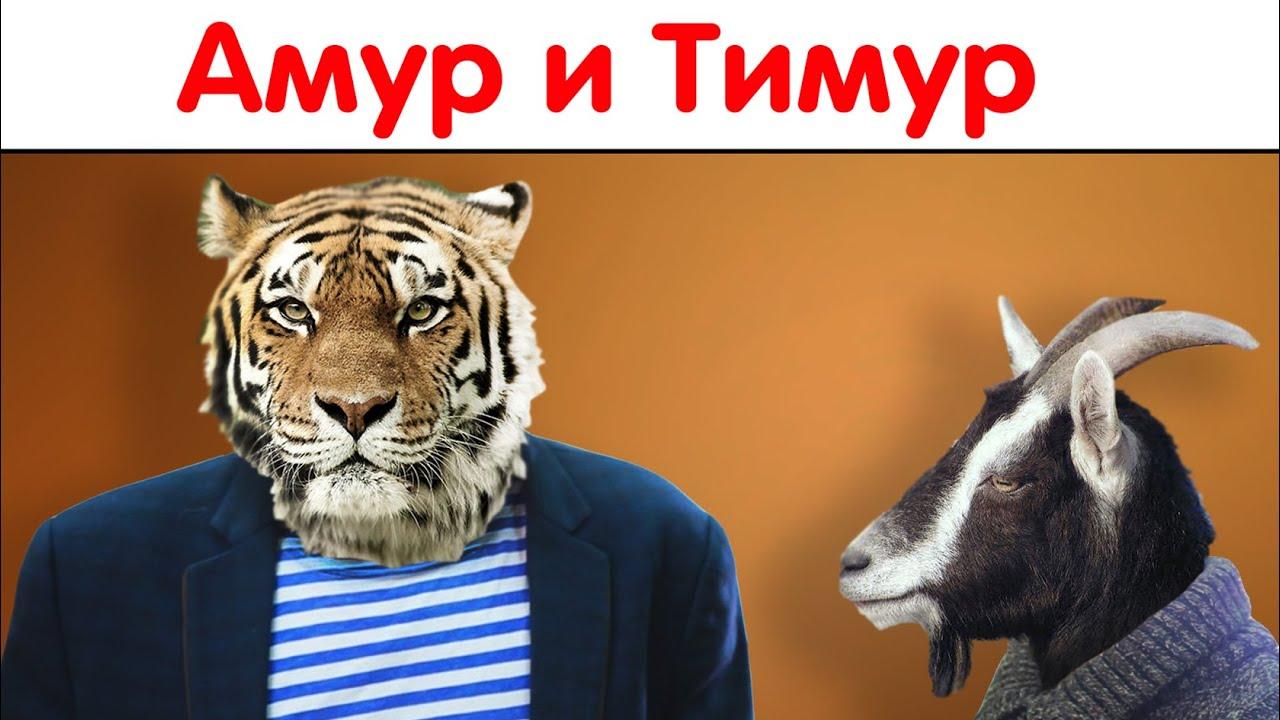 амур и тимур дружба видео
