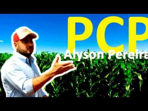 Alyson Pereira -