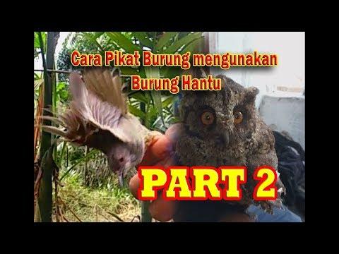 CARA UNIK PIKAT BURUNG DENGAN MENGUNAKAN UMPAN BURUNG HANTU Part 2