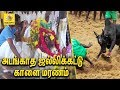 அடங்காத ஜல்லிக்கட்டு காளை மரணம் | Sivagangai Jallikattu Kaalai Death Funeral video