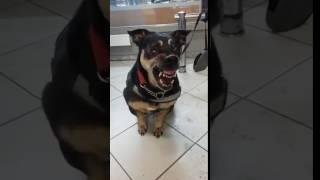 Собака-дьявол из Санкт-Петербурга [LIFECORR   200 RUB]