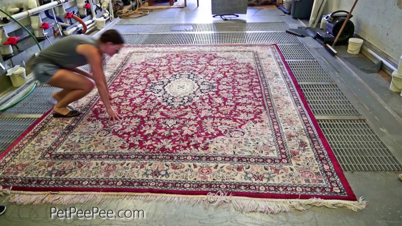 Silk Carpet clean from Animals Smells-#Silkrug