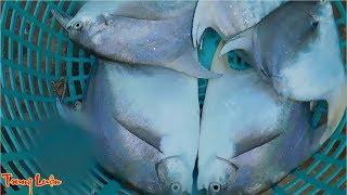 Xem đánh bắt cá cơm - P4 | Một lần nữa lại vô mánh bắt được cả đàn cá chim to thế này đây | Fishing