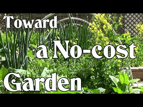 Toward a No-cost Garden: Grow Your Own Food for Next to Nothing (Frugal Gardening)