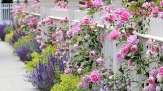 Сад в стиле шебби - шик. Shabby chic. Interesting ideas. Мой прекрасный сад. Часть 2.