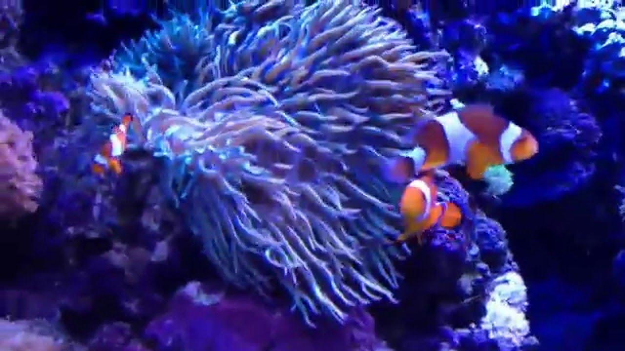 Fish aquarium in sentosa - Nemo Fish In Sea Aquarium Sentosa Singapore