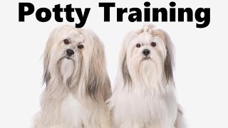 How To Potty Train A Lhasa Apso Puppy - Lhasa Apso House Training - Housebreaking Lhasa Apso Puppies