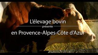 L' élevage bovin en Provence-Alpes-Côte d'Azur