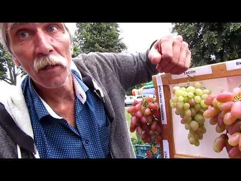 🔴🔴 Часть-6  Мнение виноградарей. Лучшие сорта ⭐2018 года. Выставка винограда в г. Пинске. Виноград