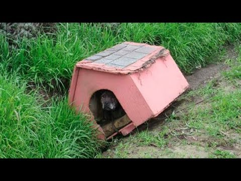 Concerned driver spots abandoned dog house in ditch – peers in and sees horrifying sight