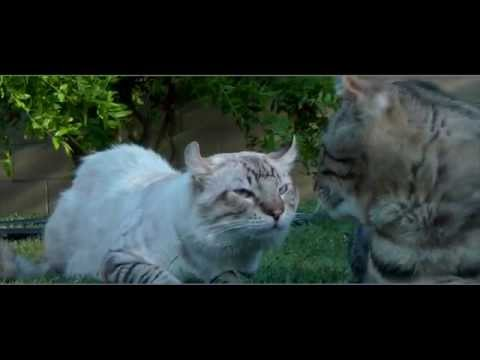 Exotic Cats Fight - 'The Camera Man falls over'