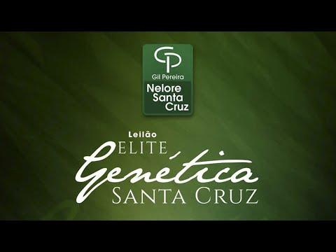 Lote 43   Linda FIV Santa Cruz   GPO A542 Copy