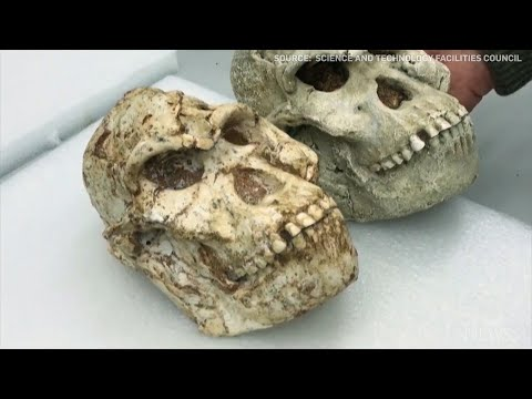 New secrets of the Little Foot fossil revealed