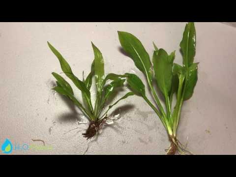 HOW TO DEAL WITH MELTING PLANTS | DAILY TRIM 28