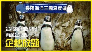 【珠海長隆海洋王國深度遊】企鵝看到飽 ???? 企鵝陪你食早餐 Chimelong Ocean Kingdom Penguin Hotel (KoalaTV   Vlog11)