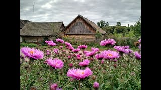 Life in the Northern Ukraine. My mother's amazing garden and a house