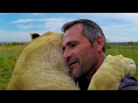 Lions are TOUGH | The Lion Whisperer