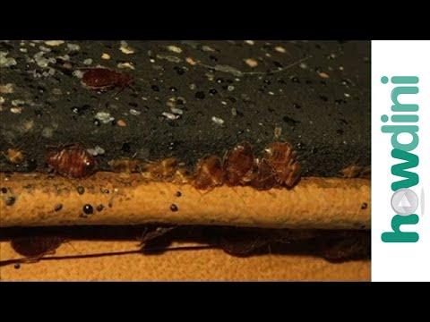 Youtube video how to get rid of bed bugs