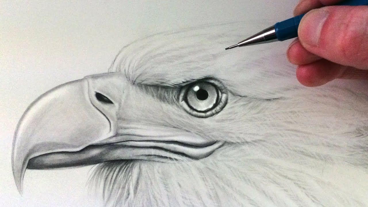 551a309e1 How to Draw an Eagle Head - YouTube