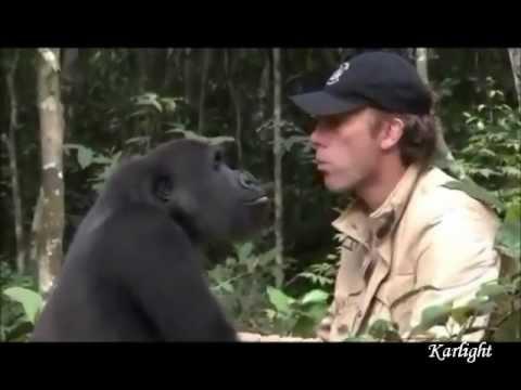 Creature meravigliose unite all'uomo!