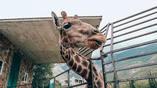Отдых в Крыму. Часть 3: ялтинский зоопарк.
