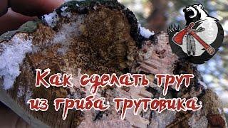 Как сделать трут из гриба-трутовика