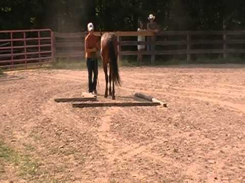 Hannah and Caspian compete in the in-hand Currahee Saddle Club Obstacle Challenge