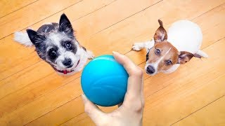 Wicked Ball - Your Pet's First Automatic Companion