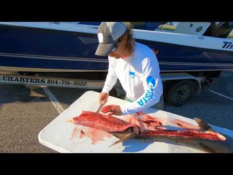 Hawg Hunter Fillets A Cobia - Dexter Outdoors