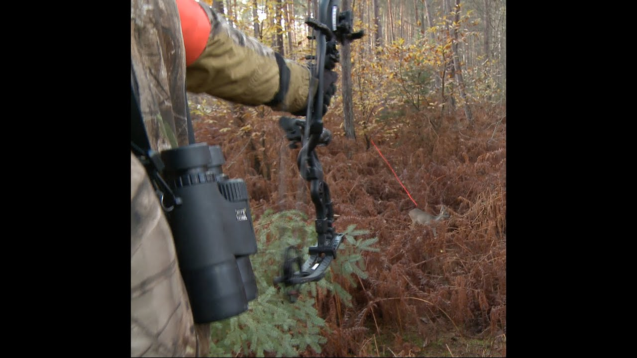 HEART SHOT! Bow Hunting Deer Kill Chasse à L'arc Chevreuil