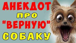 АНЕКДОТ про ВЕРНУЮ СОБАКУ Самые смешные свежие анекдоты
