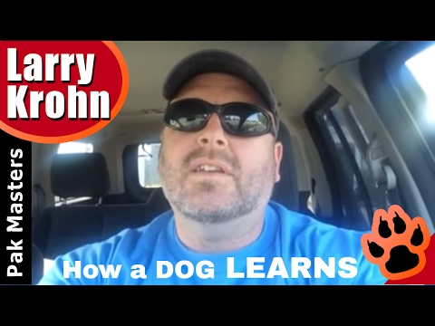 How a dog learns 🔹 A Dog's Mind 🔹 Teaching New Behaviors to a Dog