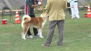 http://www.akitainu-hozonkai.com/ This is the Akita Inu(dogs) compe...