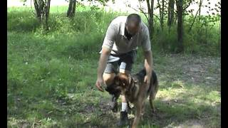 Дрессировка собак, ОКД собак, базовые упражнения 2