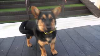 Dogs Trust Manchester - Fearne