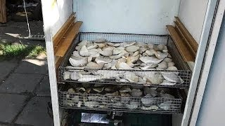 Сушилка для Грибов своими руками (Electric driers for mushrooms)(наш сайт: http://sgrib.ru (cultivation and sale of oyster mushrooms) Как сделать электросушилку из старого холодильника. How to Make Electric..., 2014-02-26T04:43:13.000Z)