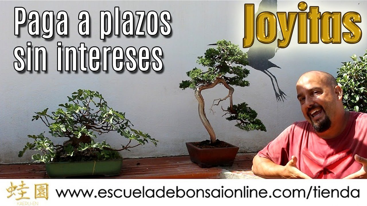 Joyitas A Plazos Sin Intereses Youtube