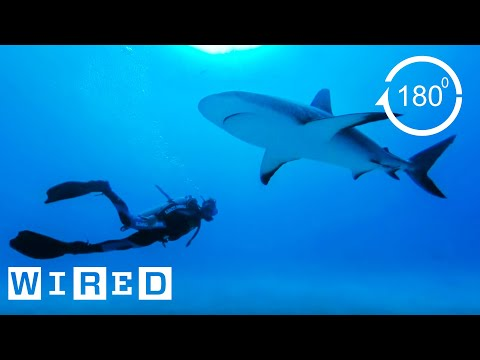 How Researchers Keep Humans Safe From Shark Attacks | Damage Control | WIRED