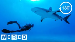 How Researchers Keep Humans Safe From Shark Attacks (180)| Damage Control | WIRED