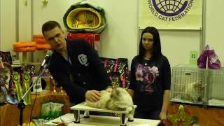 WCF выставка Сибирских кошек.