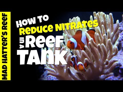 HOW TO: Reduce Nitrates in a Reef Tank Without Water Changes