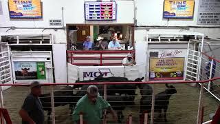 7-15-21 Black Heifers 9 hd. 530 lbs. @ $161.00  Thank You Daryl Freeze
