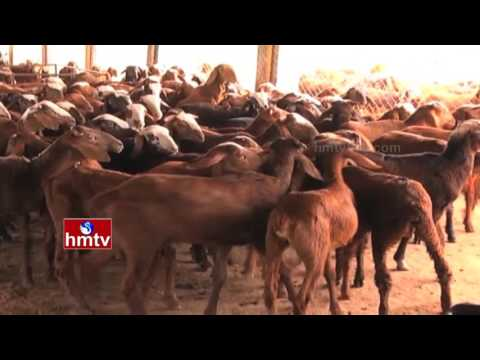 Successful Organic Apple Farming | TS Govt Steps To Improve Sheep Farms | Nela Talli | HMTV