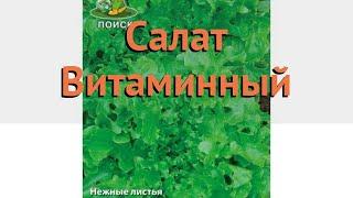 Салат обыкновенный Витаминный Листовой 🌿 обзор: как сажать, семена салата Витаминный Листовой